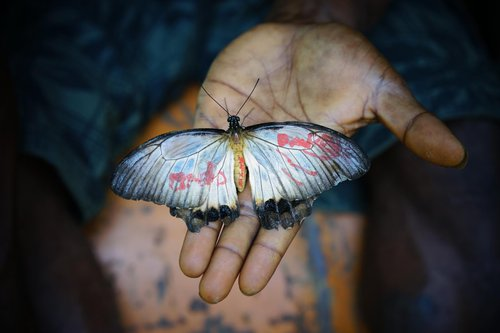 PNG butterfly